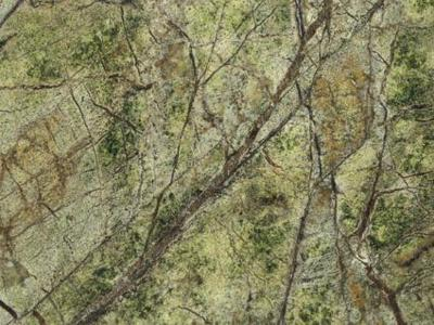 Rain Forest Green